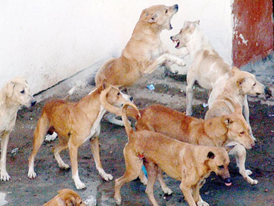 dog terror in uttar pradesh